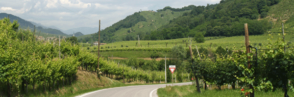 Bike Tour Italy, Prosecco wine road